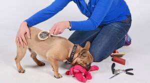 puppycursus Den Bosch