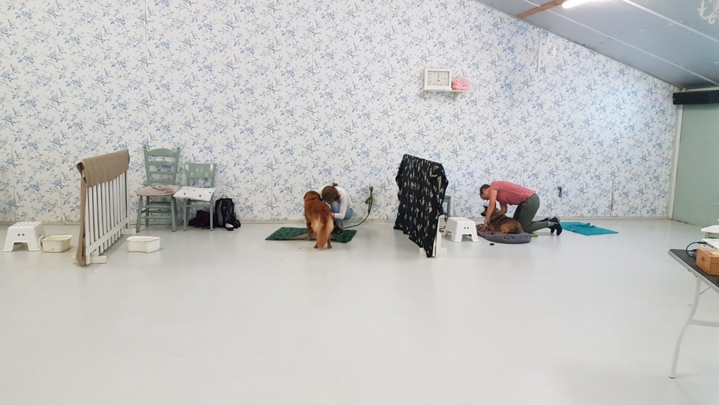 Hondenmassage Hondenacademie Boxtel 2019